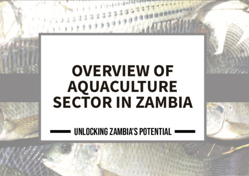 BLOG – Overview of The Aquaculture Sector In Zambia