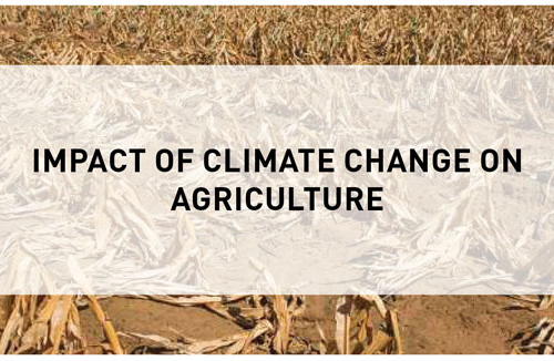 Blog – Impact of Climate Change on Agriculture